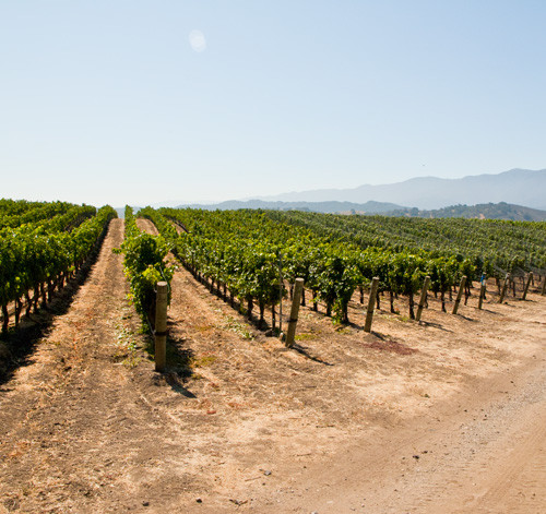 A Note on McGinley Vineyard