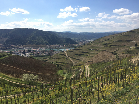 Notes on my trip to the Northern Rhone Valley April 2016