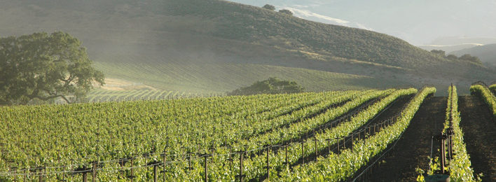 Quest to Perfect Sauvignon Blanc