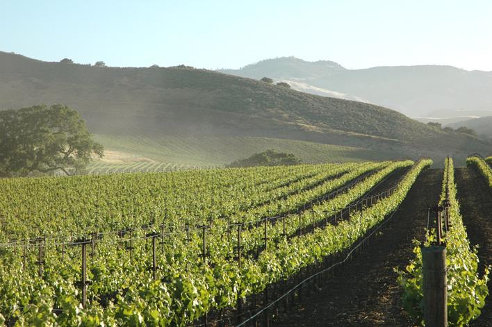 Quest to Perfect Sauvignon Blanc