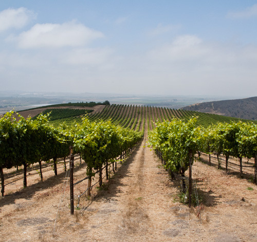Ojai Vineyard in the New York Times