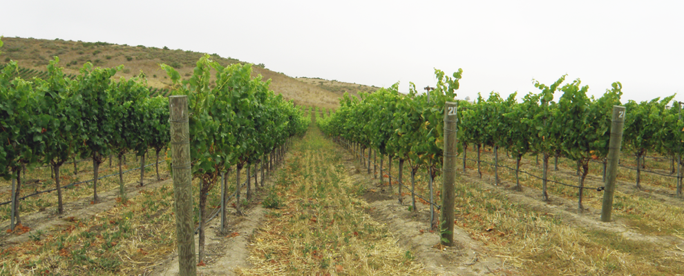 ANNOUNCEMENT: Fe Ciega Vineyard is now owned by Adam & Helen!