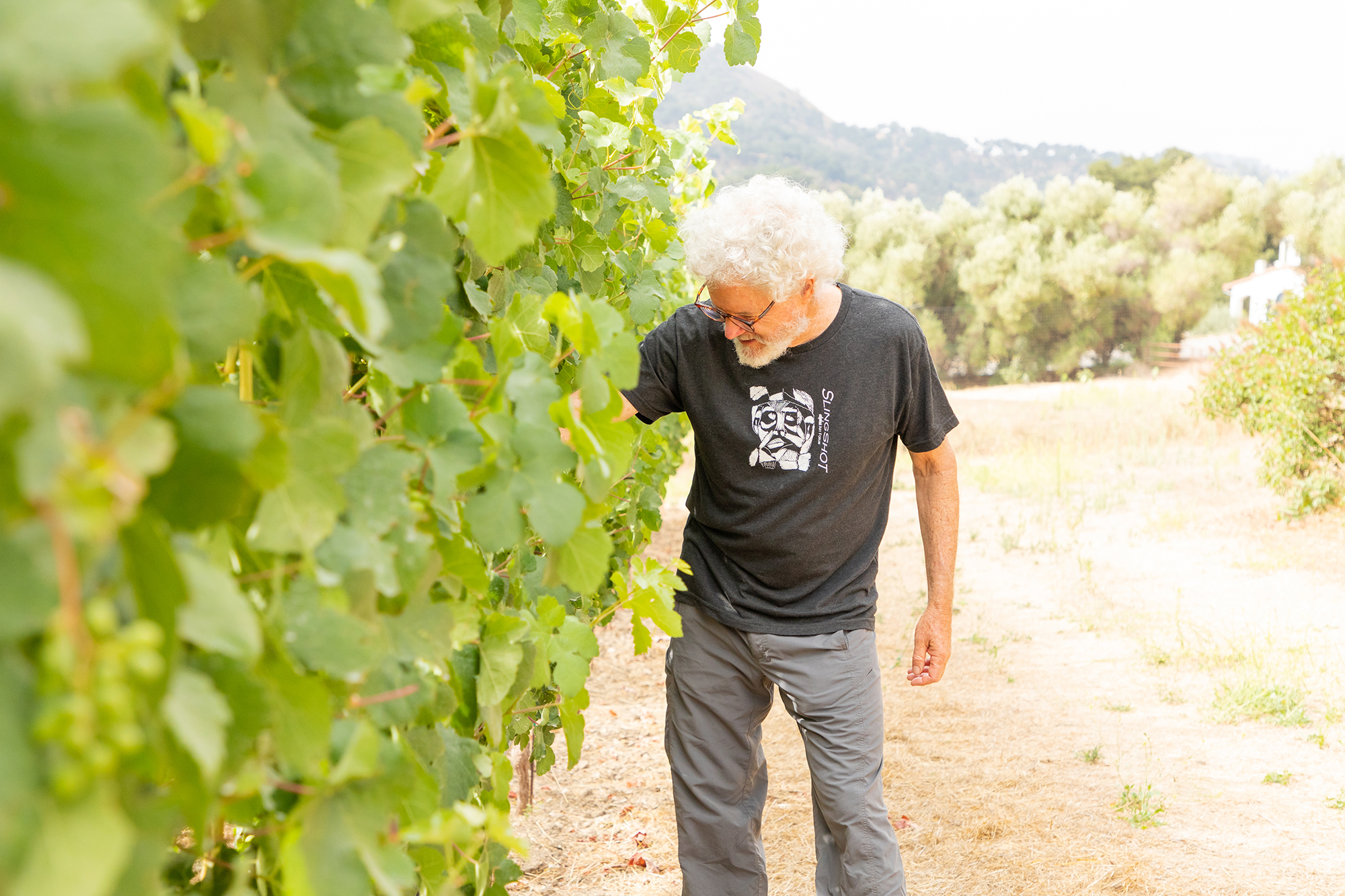 UPDATE: The hybrid varietals planted at our vineyard in Ojai, as reported by Wine Enthusiast